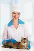 ID 3279990   Cat on examination by veterinarian   High resolution stock photo   CLIPARTO
