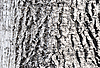 Photo 300 DPI: background of tree bark