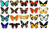 Collection of various butterflies | Stock Foto