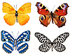 Various butterflies | Stock Foto