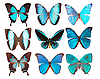Collection of butterflies | Stock Foto