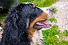 Hund | Stock Foto