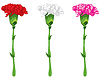Vector clipart: Coloured carnations