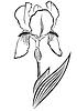Iris pogon | Ilustración vectorial
