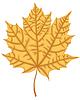 Векторный клипарт: Кленовый лист