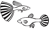 Vector clipart: Guppy fish