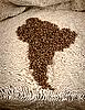 Фото 300 DPI: кофейные зерна в виде Южной Америки