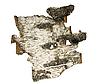 ID 3095339 | Bark of birch | Foto stockowe wysokiej rozdzielczości | KLIPARTO