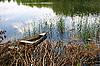 Pond | Stock Foto