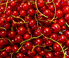 Red currants | Stock Foto
