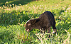 ID 3092975 | Cordero en el prado verde | Foto de alta resolución | CLIPARTO