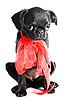Little black puppy | Stock Foto