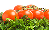 Tomatoes, dill and parsley | Stock Foto