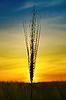 Golden sunset over harvest field | Stock Foto