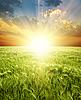 Kłosy pszenicy zielony pod sunrays | Stock Foto