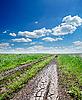 ID 3091287 | Agrietado camino rural en hierba verde y cielo nublado | Foto de alta resolución | CLIPARTO