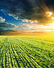 Agricultural green field and sunset | Stock Foto