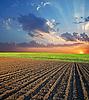 Pole rolnych i słońca | Stock Foto