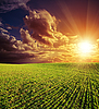 Agricultural green field and red sunset | Stock Foto