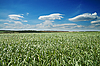 Field with green grass | Stock Foto