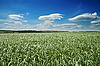 Pole z zieloną trawę | Stock Foto