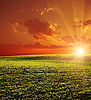 Photo 300 DPI: agricultural green field and red sunset