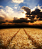 ID 3091777 | Road in field with gold ears of wheat | High resolution stock photo | CLIPARTO