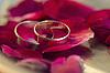 Wedding rings and roses petals | Stock Foto