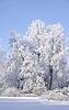 Hoarfrost on tree in frosty sunny day | Stock Foto