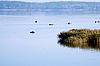 Фото 300 DPI: рыбалка с лодок на озере