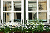 Windows with flowers | Stock Foto