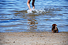 Game with small puppy at seacoast | Stock Foto