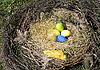 彩色复活节蛋巢 | 免版税照片