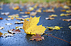 Maple leaf   Stock Foto