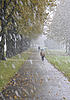First snow in park in the late autumn   Stock Foto