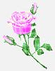 розовые розы, традиционные украинские элементы вышивки