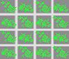 Векторный клипарт: зеленые цветы на клетки