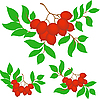 Vector clipart: set of three bunches of rowan