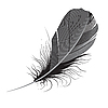Vector clipart: feather.