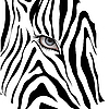 Vector clipart: Human eye among black zebra lines