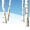 Four birches in winter wood.