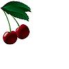 Векторный клипарт: Два спелой вишни.