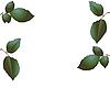 Векторный клипарт: Зеленые листья деревьев.