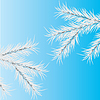 Vector clipart: Gray branch of pine.