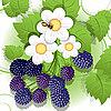 Vector clipart: blackberry