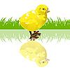 Векторный клипарт: курица