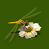 Vector clipart: dragonfly on flower