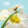 Vector clipart: dragonfly on herb