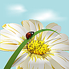 Vector clipart: Ladybird on flower