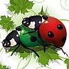 Vector clipart: Ladybirds